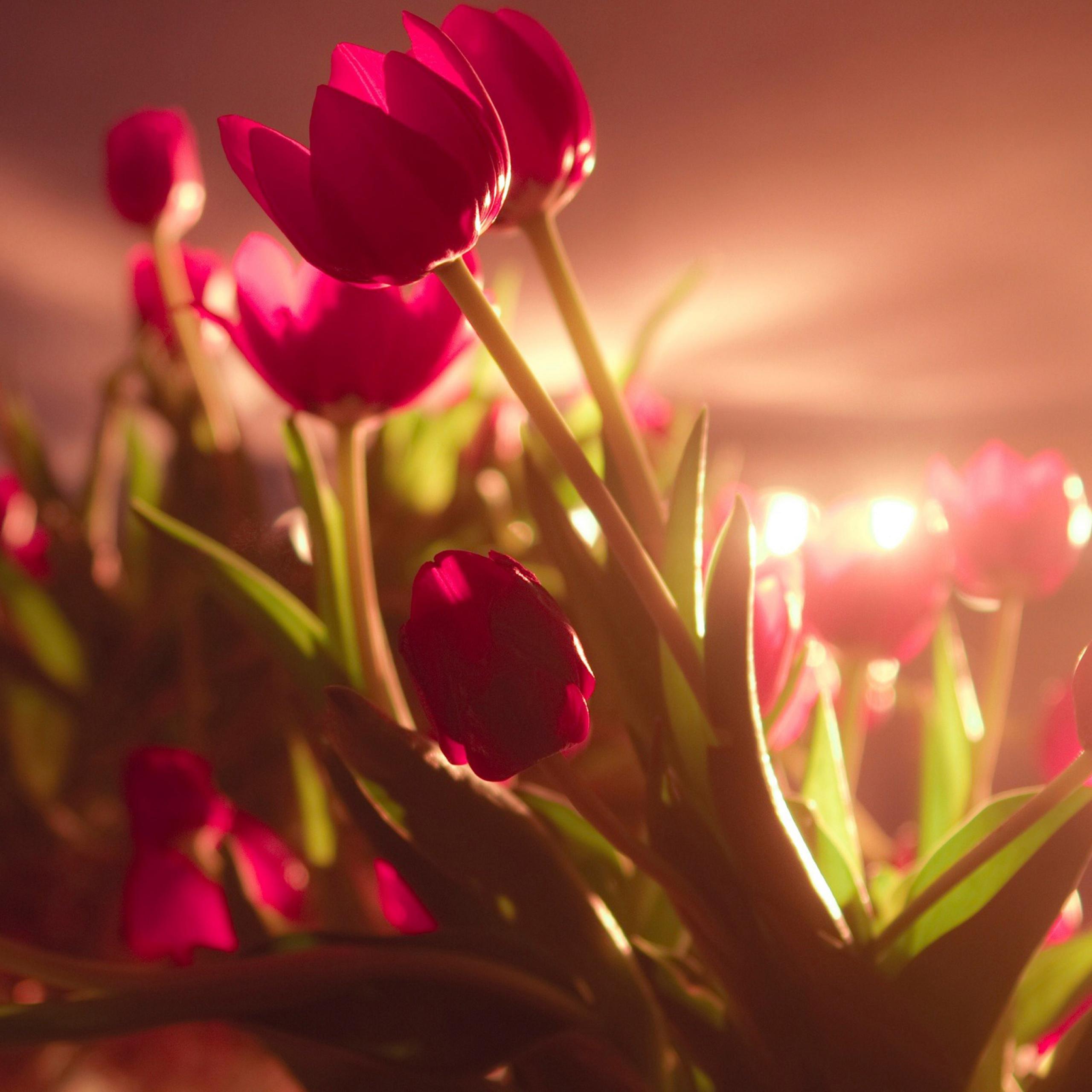 صور ورد أجمر حلو رومانسي خلفيات شاشة جميلة جدا صور خلفيات عالية