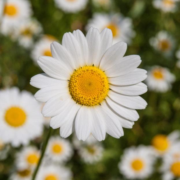خلفيات ورود وزهور جميلة جدا صور خلفيات عالية الدقة Hd Wallpapers