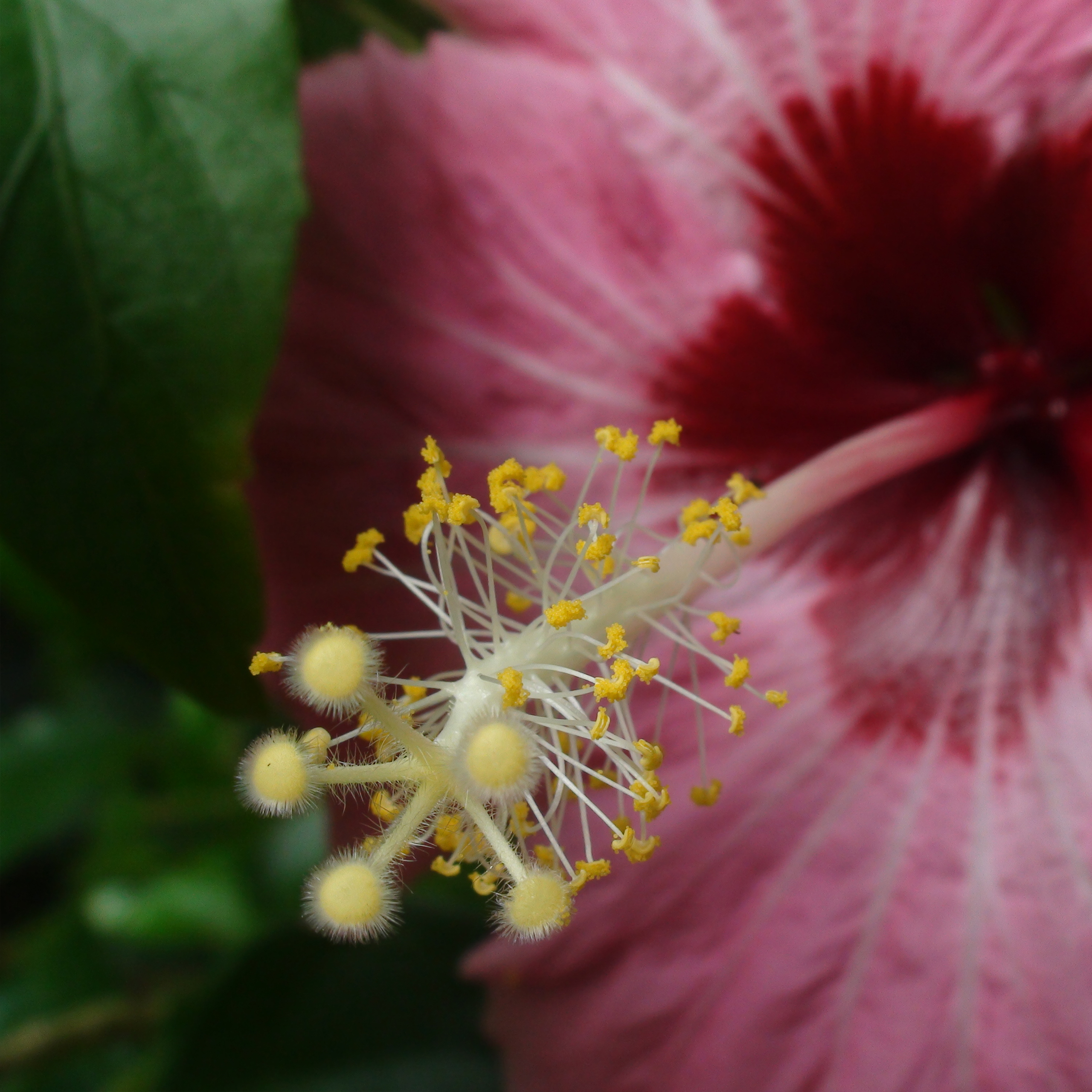 أحلى ورد وزهور Best Roses & Flowers