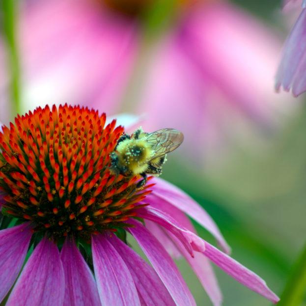 صورة زهرة مع نحلة خلفيات ورد وزهور جميلة من موقع خلفيات فور يو