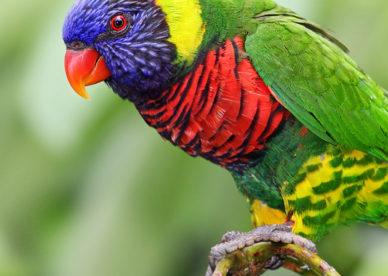 Colorful Rainbow Parrot خلفيات ايفون iPhone 6, iPhone 7, 750x1334 - صور خلفيات عالية الدقة HD Wallpapers